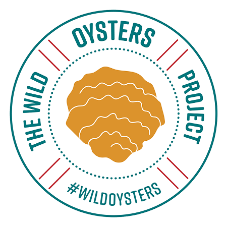 The Wild Oysters Project at Conwy Marina